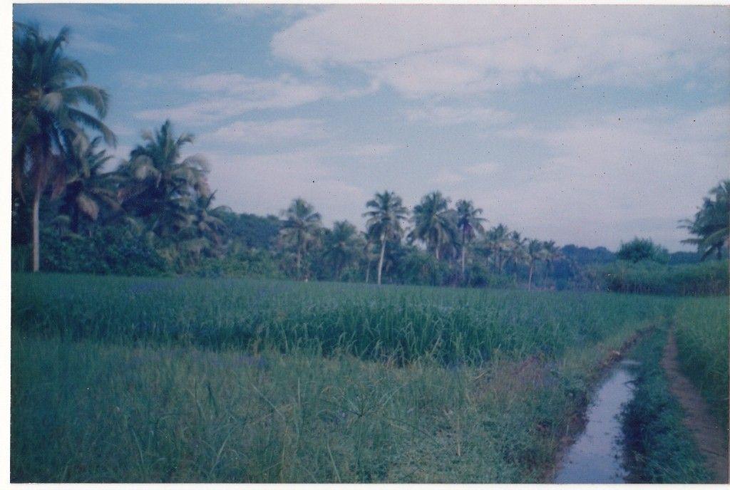 அழகான நெல் வயல்கள்2 - Page 14 Kulambadam2000
