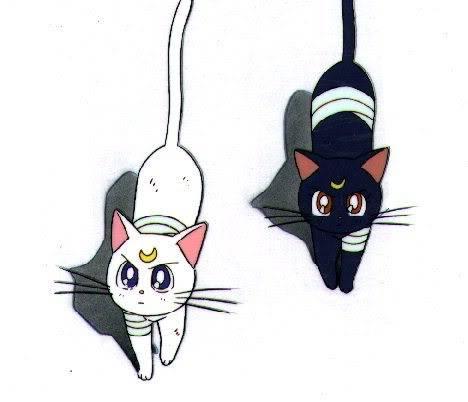 **GATOS DEL ANIME** Cats