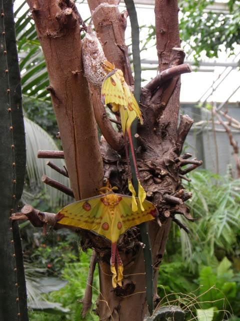 Insectes, papillons... P8280005