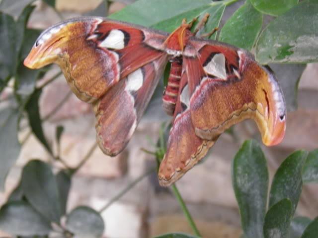 Insectes, papillons... P8280007