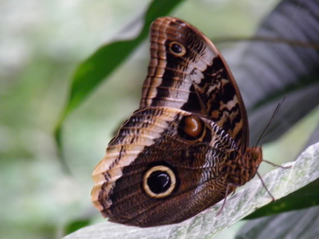 Insectes, papillons... P8280014
