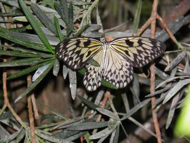 Insectes, papillons... P8280022