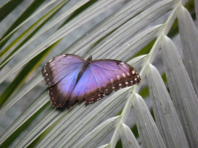 Insectes, papillons... P8280024