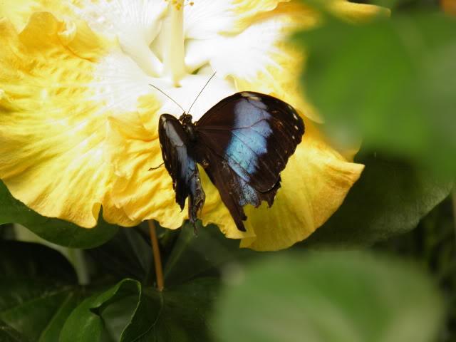 Insectes, papillons... P8280025