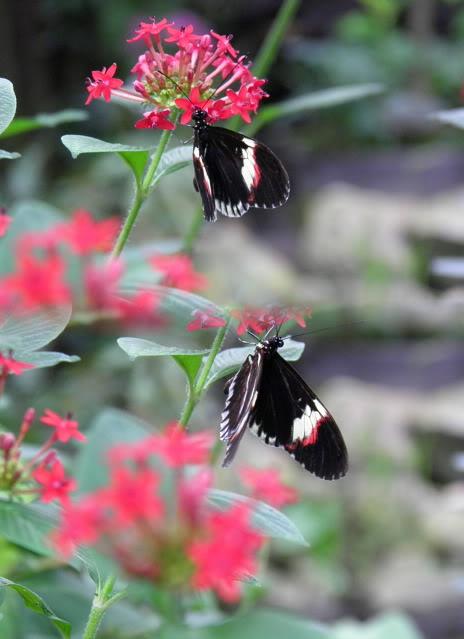 Insectes, papillons... P8280050