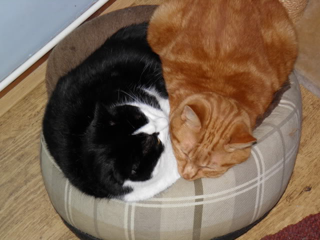 Chats, chiens... - Page 2 PC040009
