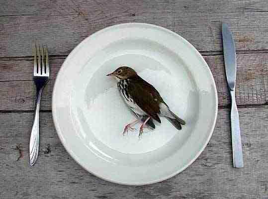 SIGHTHINGS Dead_bird