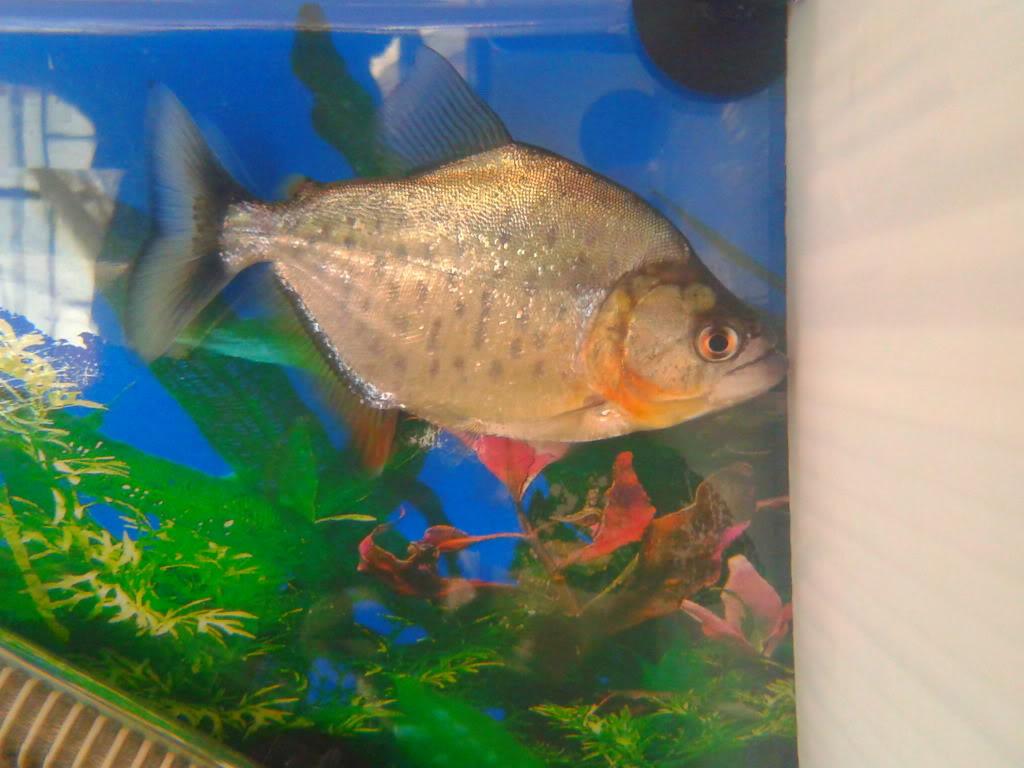 Presento mis peces 2012-12-25130517
