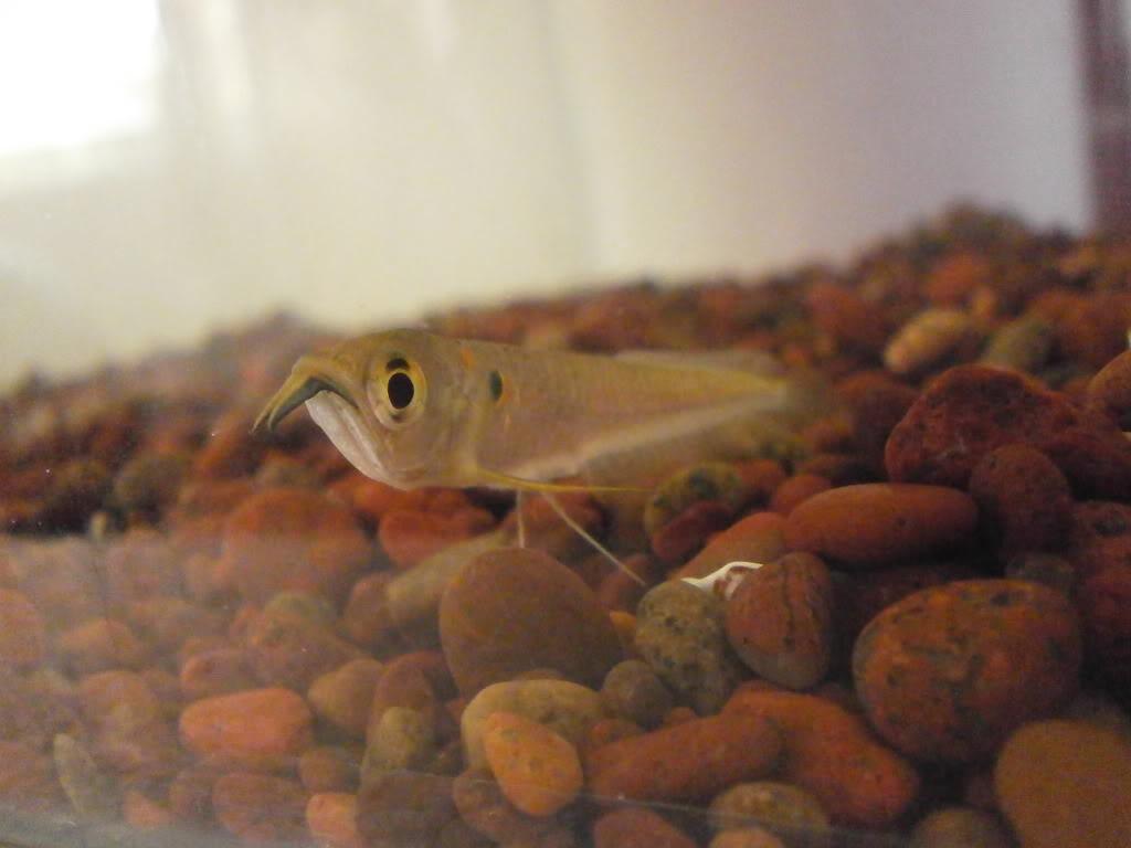 Presento mis peces PC270043