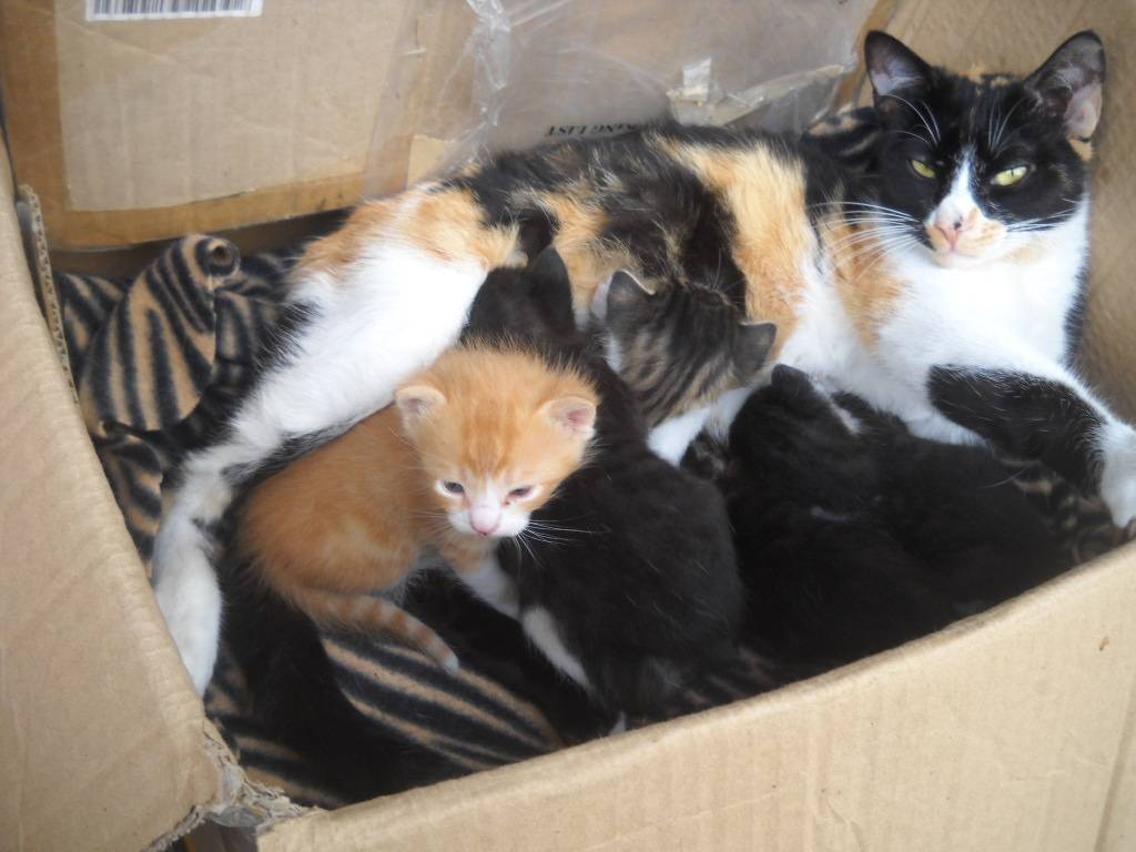 Πέντε μωρογατάκια χαρίζονται 030-3