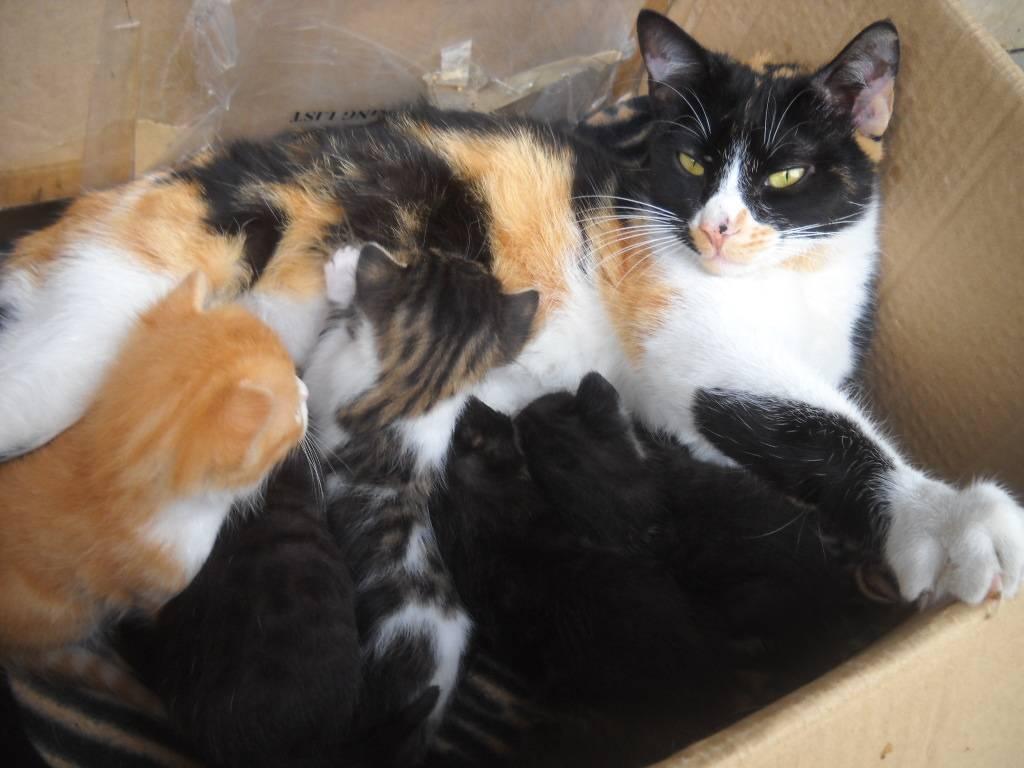 Πέντε μωρογατάκια χαρίζονται 031-5