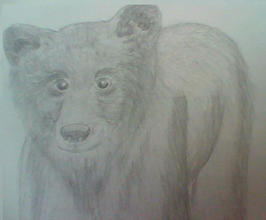 Bear's Drawings and other Art :3 Bear