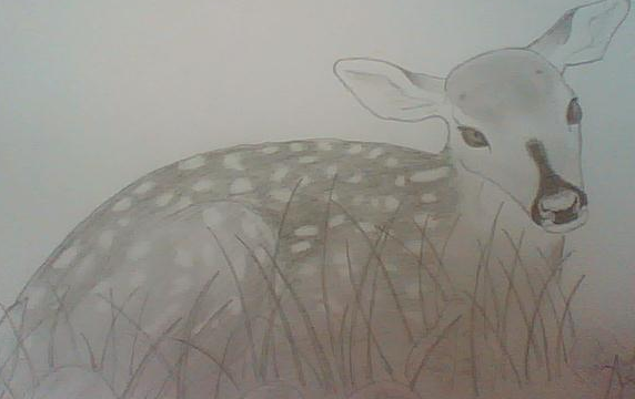 Bear's Drawings and other Art :3 Fawn