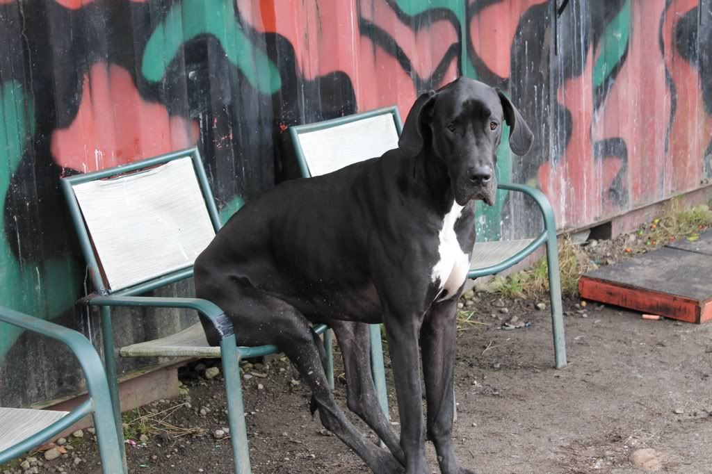 i wish my dog was this big 116a3d33