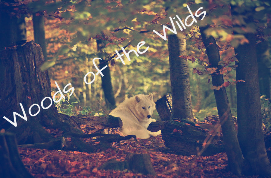 Woods Of The Wilds