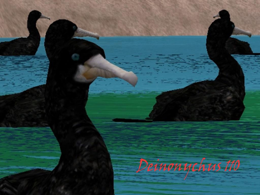 swimmer cormorants Cormoyecoingame