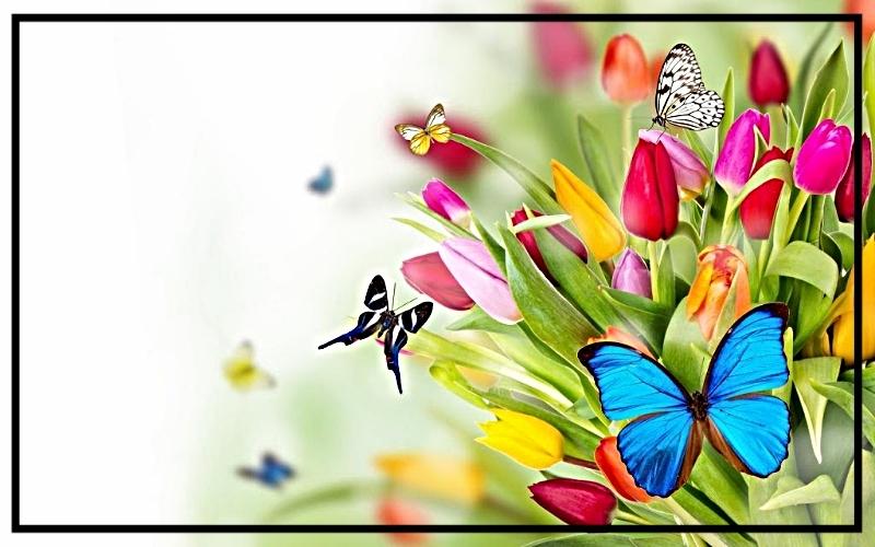butterflys photo 131214hinh-nen-buom-va-hoa-sac-so_zpskjjzgn1a.jpg