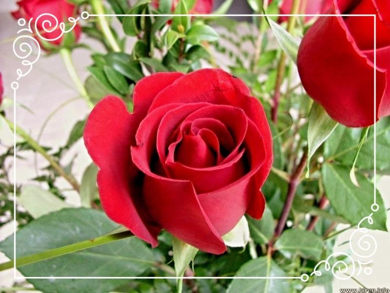 photo 72ad3054-b4b1-405f-85e8-61690bed8420_zpssqud5ej1.jpg