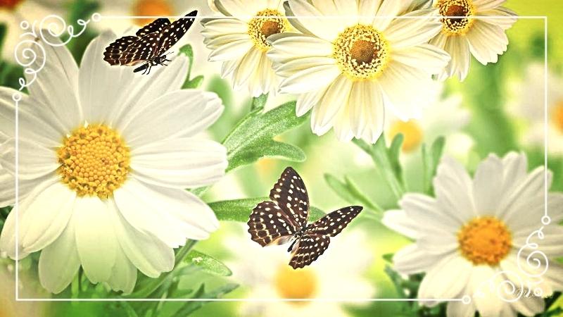 photo decorating-spring_zpsxqy6t9er.jpg