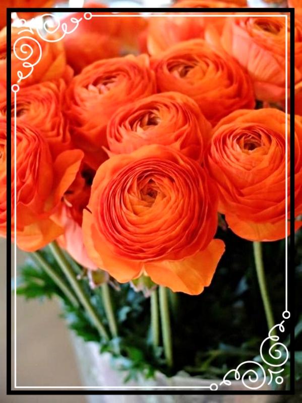 photo 23d5936d-12c6-486e-8ea9-afa0b9402034_zpskhntncgx.jpg
