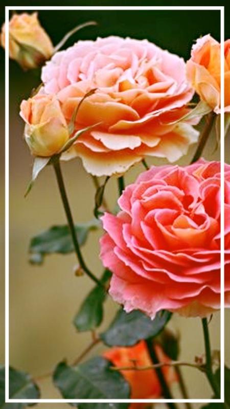 photo 642e8be1-4724-4775-8a2b-d628eb99ba9a_zpsqsbzbcqs.jpg