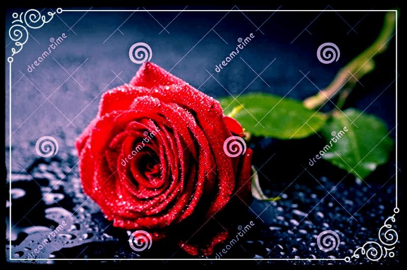 photo 6b5c2760-4789-4f20-a74e-da2b3a03dd22_zps8ylaboqg.jpg