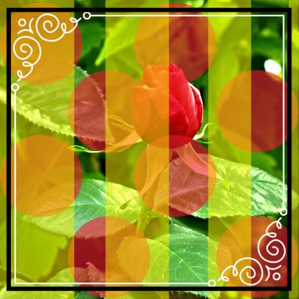 photo 8258cf8d-3c3d-4d08-a333-5c78b4ac4164_zpsaq43bxjk.jpg