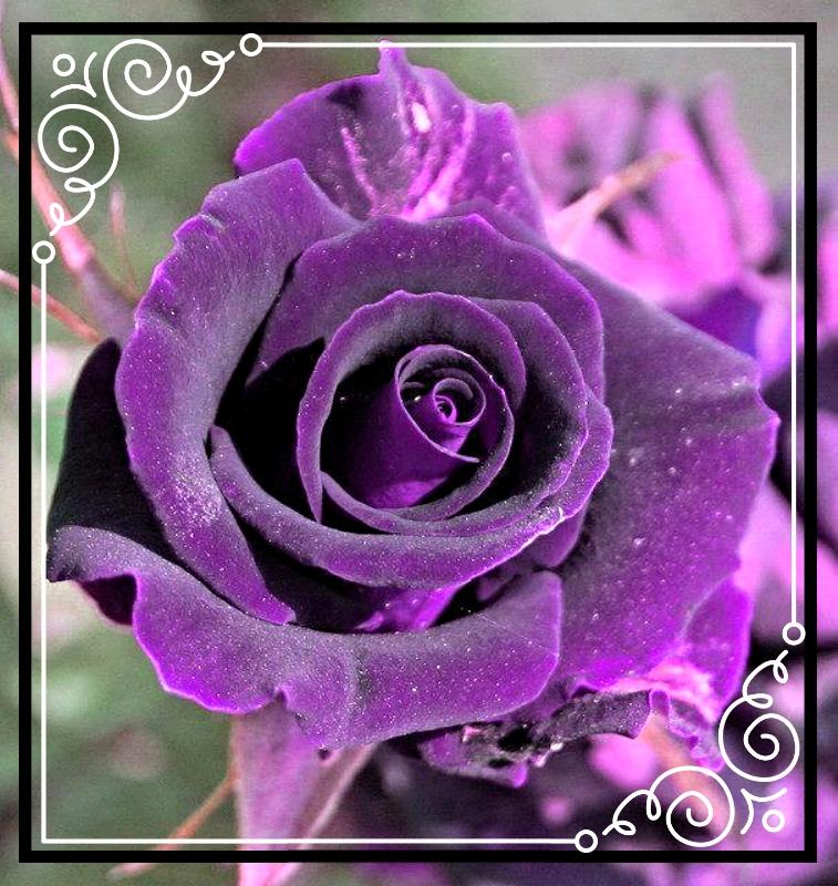 photo 92c559d5-1454-4b7b-98ff-6f4ebaf24ff8_zpslxc80woa.jpg