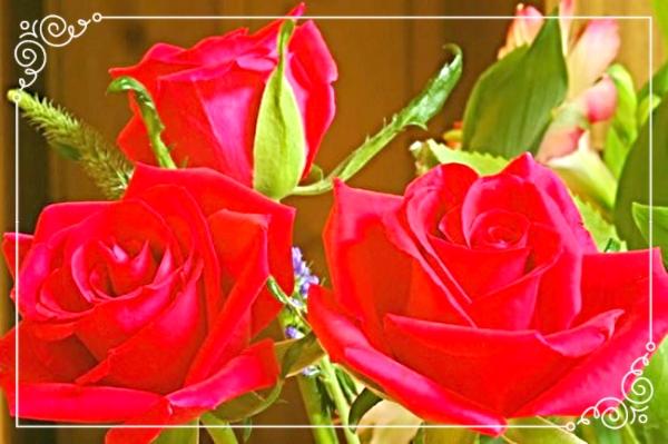 photo 9f49ad63-2e61-48a9-8089-49b5521c0c10_zpsqtonwlkh.jpg
