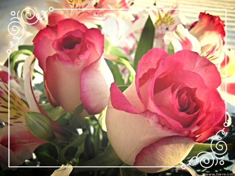photo a5f5d908-aacf-4e4a-8b97-f592e83244ef_zpsqvrzwmlp.jpg