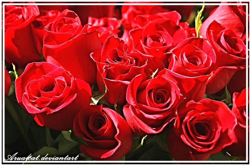 photo bunch_of_flowers_by_arualcat-d4yoroh_zpso1vbuzhm.jpg