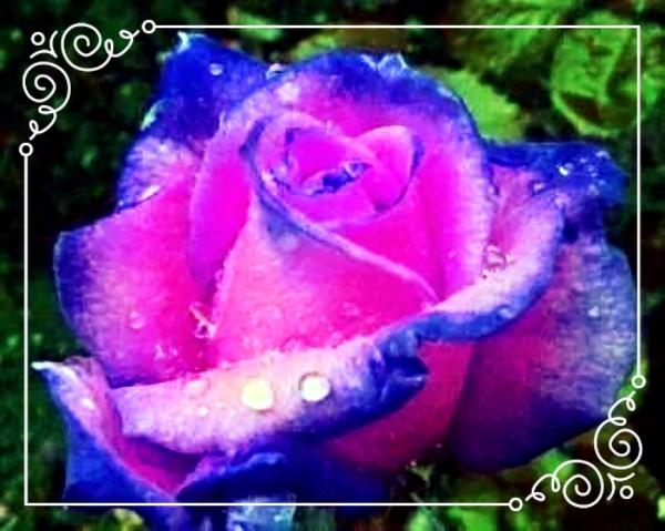 photo c0ba4da0-8341-41d0-93b8-a227f49c92c1_zpseji4hsmd.jpg