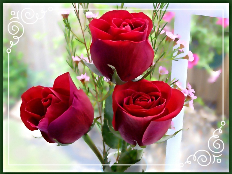 photo cce1f5d4-cb89-444f-9407-bd24fa4637ba_zpsoen7bpjk.jpg