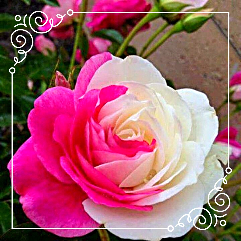 photo fe4fea53-f833-4cf5-bd99-28f40a8475b4_zpspq8qpi6x.jpg