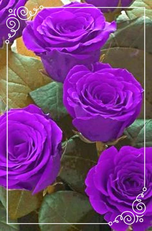 photo fe95be7e-65ca-4fae-89a8-6684c2c95fa8_zpszx04ok1j.jpg