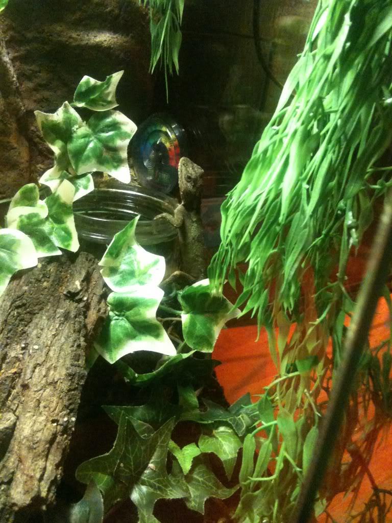 new little friend chinese tree dragon 30949b0f