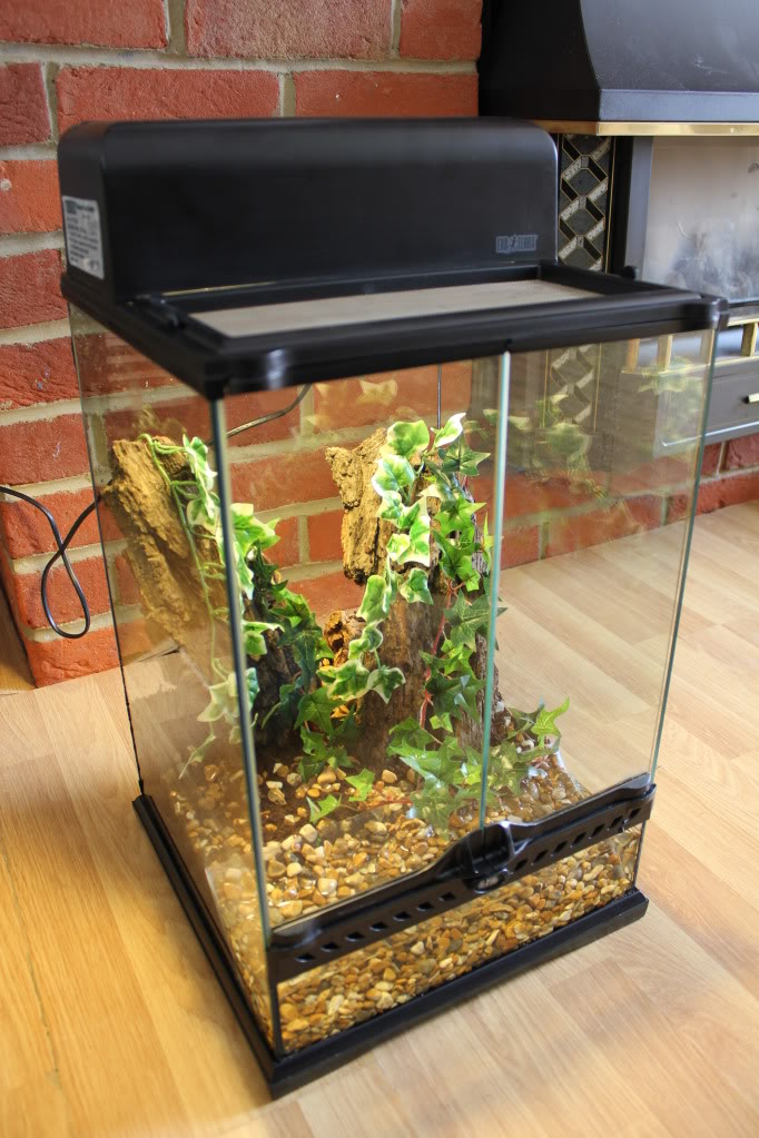 [Sharing] Show Off Your Enclosures - Page 9 IMG_1794