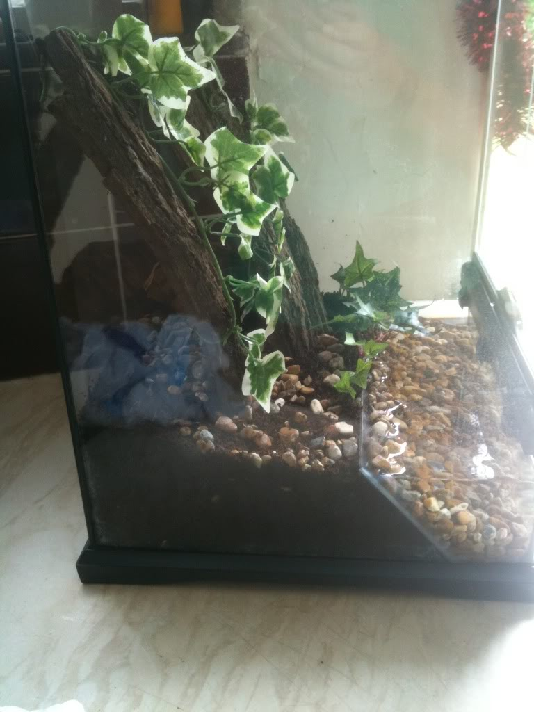 [Sharing] Show Off Your Enclosures - Page 9 IMG_5398