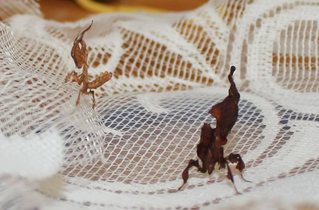woo hoo got my mantis :) - Page 5 IMG_3639