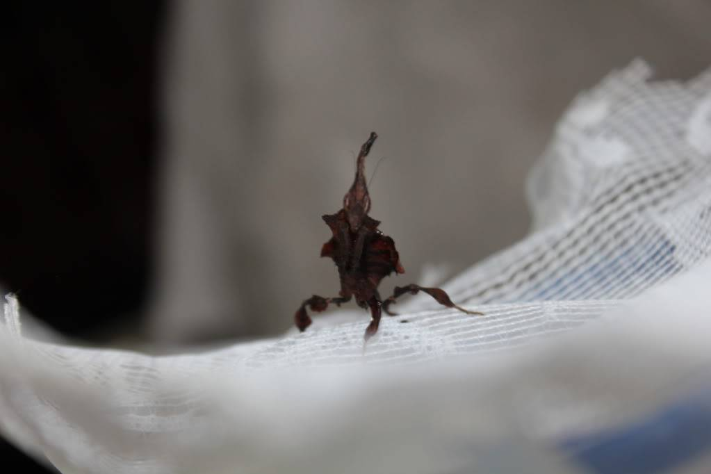 woo hoo got my mantis :) - Page 5 IMG_4010