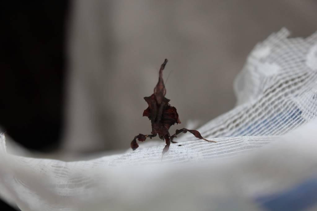 woo hoo got my mantis :) - Page 5 IMG_4011