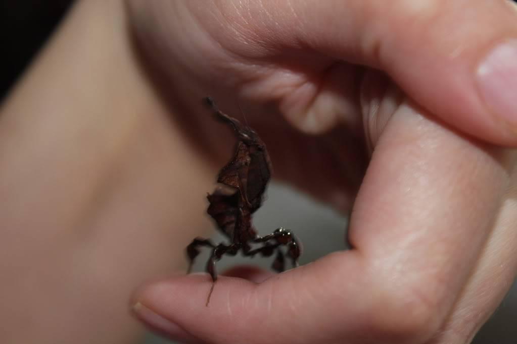 woo hoo got my mantis :) - Page 5 IMG_4016