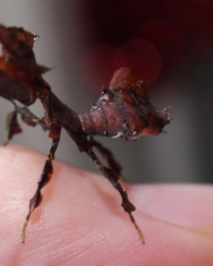 woo hoo got my mantis :) - Page 5 IMG_4024