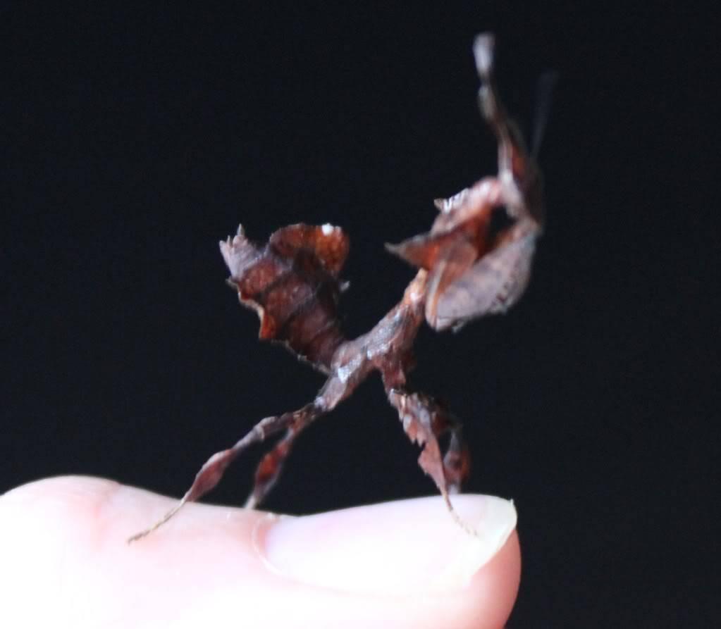 woo hoo got my mantis :) - Page 5 IMG_4029