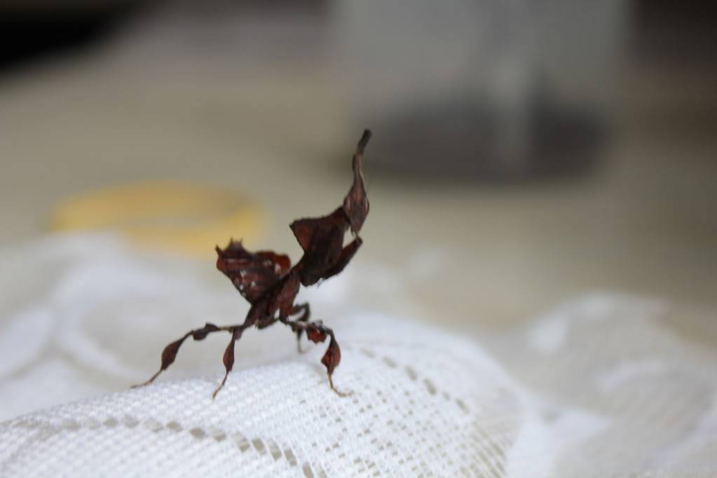 woo hoo got my mantis :) - Page 5 IMG_4034