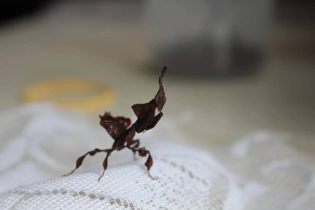 woo hoo got my mantis :) - Page 5 IMG_4035