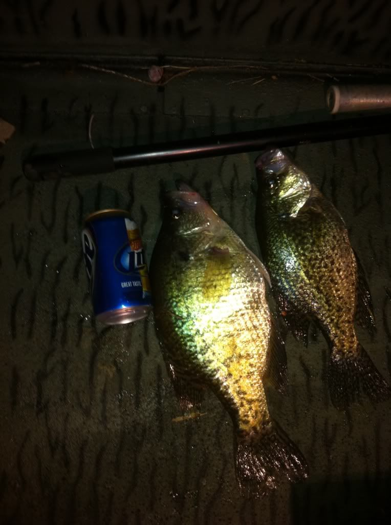 Fish.      C381b345