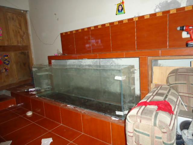 nuevo proyecto acuario empotrado ciclidos DSC02110