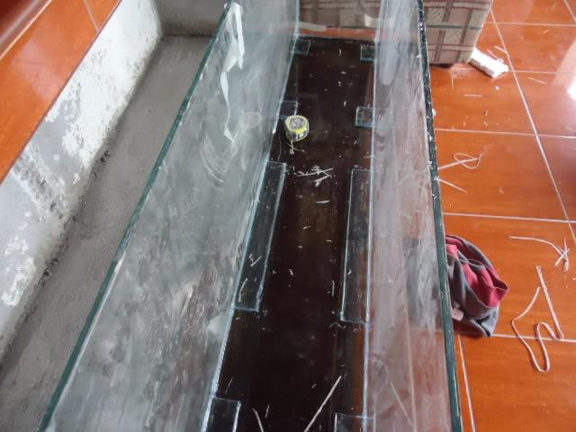 mi nuevo acuario empotrado ciclidos DSC02122