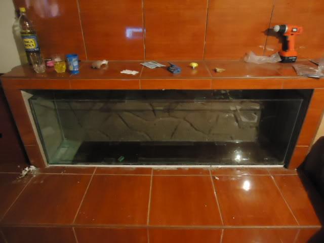 nuevo proyecto acuario empotrado ciclidos DSC02142